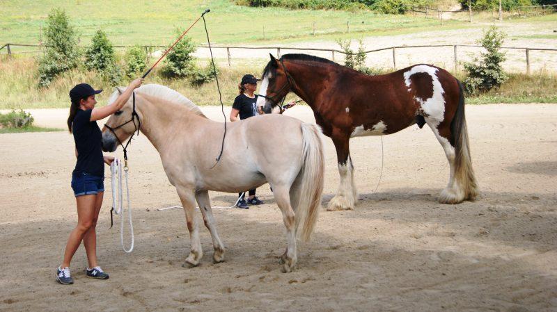 Kolejne warsztaty Parelli Natural Horsemanship w Lubiechowie